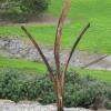 "~ Sold Windswept 65"" high   38"" wide   18"" deep"
